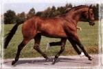 Das Pferde-Quiz für Jedermann