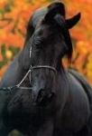 Welches Pferd passt zu dir?