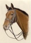 Welche Pferderasse steckt in Ihnen?