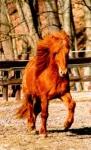 Wie gut kennst du dich mit Pferden wirklich aus?