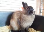 Was wächst bei Kaninchen ständig nach?