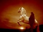 Die Welt der Pferde einmal anders