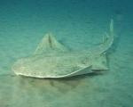 Gibt es Haie, die aussehen wie der Leopardenhai?