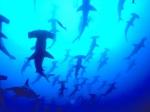 Welcher Hai hat die am besten entwickelten Zähne?