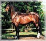Kennst du dich mit Pferden aus?