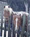 Was tut man wenn das Pferd steigt?