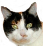 Wird mal eine männliche dreifarbige Katze geboren, ist sie meist unfruchtbar