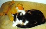 """Im Volksmund werden die dreifarbigen Katzen auch als """"Glückskatzen"""" bezeichnet, weil sie wohl nicht allzu oft vorkommen."""