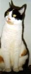 Köpfchen geben ist das Begrüßungsverhalten miteinander vertrauter Katzen. Das Tier stößt dabei mit der Stirn gegen die des anderen und streicht a