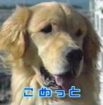 Wie heißt der Hund von den Tanners?