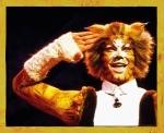 Die Cats DVD. Wie gut kennst du dich aus?