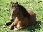 Pferde sind Einzelgänger!