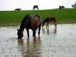 Pferde trinken bis zu 80Liter an einem Tag