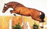 Die Rosse ist die Paarungszeit der Pferde