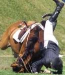 Jedes Pferd springt gerne höher als 1 Meter