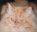 Wie schaut diese Katze?