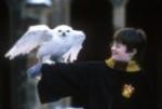 Wie heißt Harrys Eule?