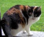 Aufmerksamkeit variiert bei Katzen von gelangweiltem Wahrnehmen bis hin zum temperamentvollen Jagdfieber. Wie merkt man, dass etwas ihre Aufmerksamkei
