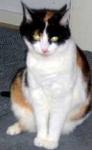 Leider sind die Signale einer zur Abwehr bereiten Katze teilweise äußerst subtil. Deshalb werden sie leicht übersehen, von Dir auch?