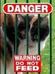 Wie erkennt man, dass die Katze kurz vor einem Angriff ist?