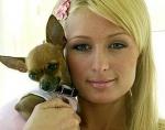Wie heißt Paris Hilton's Alter und Neuer Hund?