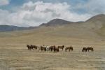 Wer führt die Herde zu den Fressplätzen/ Tränken und bestimmt wann es Zeit ist aufzubrechen und wohin es geht?