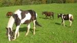 Was sind die traditionellen Futtermittel der Pferde?