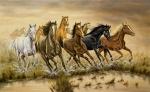 Was sind die wichtigsten Grundfärbungen der Pferde?