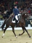 Welche Pferderasse ist die zahlenmässig stärkste europäische Warmblutzucht?