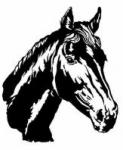 Wir wird die psychische Verhaltensstörung eines Pferdes in Stallhaltung genannt, das durch Vereinsamung oder Langeweile entsteht?