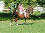 Welches Pferd wurde wegen seinem Mut, seiner Intelligenz und Beweglichkeit früher in der portugiesischen Kavallerie eingesetzt?