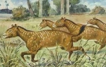 Wann begann die Entwicklung der Pferde?