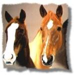 Fangen wir mal ganz easy an: Wie heißt die größte Pferderasse?