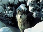 Welches Tier ist der Stammvater des Hundes?