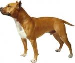 """Welcher Familienhund hat in den Usa, wegen seiner Gutmütigkeit und seiner hohen Toleranz gegenüber Kindern, den sprichwörtlichen Ehrennamen """"N"""