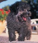 Wieviel Hunderassen werden derzeit von der Fédération Cynologique International(FCI) anerkennt? (Stand: 11/2004)