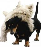 Aus wievielen Lichtrezeptoren besteht das Auge des Hundes?