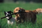 Wie alt wurde laut Guinness-Buch der Rekorde der älteste Hund?