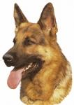 Wieviel Zähne hat das Gebiss des Schäferhundes gemäß der Zahnformel?