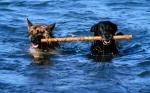 Wie bezeichnet man das Herbeibringen eines vom Hundeführer geworfenen Gegenstandes durch den Hund?