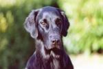 Ein Therapiehund ist ein Hund,.......