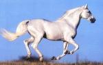 Welche Krankheit kann ein Pferd bekommen, wenn es zuviel frisches Gras frisst?
