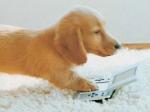 Können die Hunde sich beim Betteln drehen?