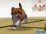 Wie schnell sollte der Hund laufen können(beim Gassi gehen)?