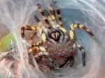 Vogelspinnen sind extrem giftig.