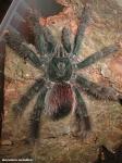 Die Spinnenangst heißt Arachnophobie.