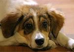 Ahr Endspurt ..:-)..Wie heißt der süsse Hund von Emily und Phillip?