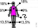 Anatomisches Quiz
