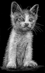 """Aus welchem Film stammt das Zitat """"Und kratz die Katze von der Wand!"""""""