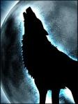 Wer der vier Freunde ist kein Animagus, sondern ein Werwolf?